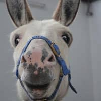 Photo of Formstack Donkey