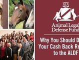 Why You Should Donate Your Cash Back Rewards to the Animal Legal Defense Fund: Legislation, Litigation, and Law Enforcement to Protect Animal Rights