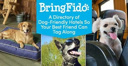 Bringfido Is A Dog Friendly Travel Directory