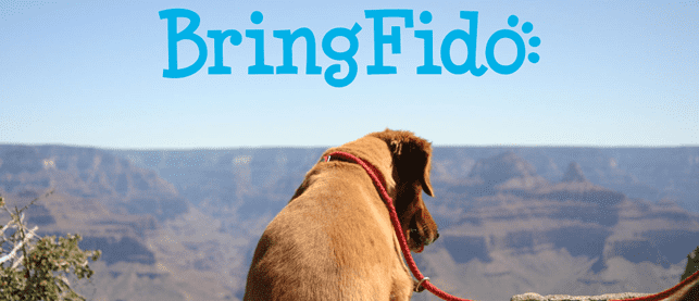 Photo of dog on vacation with BringFido logo