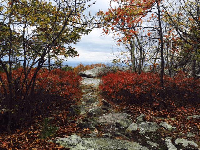 Photo of the Appalachian Trail in Loudoun