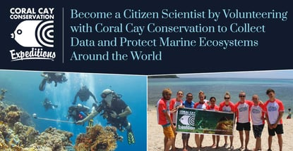 Coral Cay Conservation Volunteers Protect Marine Life