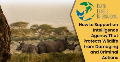 Earth League International Protects Wildlife