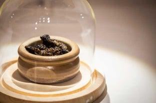 Mopane Worms Photo