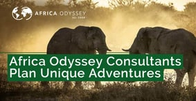 Africa Odyssey Safari and Travel Consultants Help Adventure Seekers Turn Their Credit Card Rewards into Unique Experiences