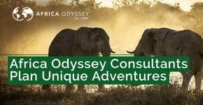 Africa Odyssey Consultants Plan Unique Adventures