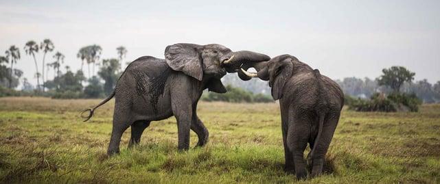 Photo of elephants on Africa Odyssey safari
