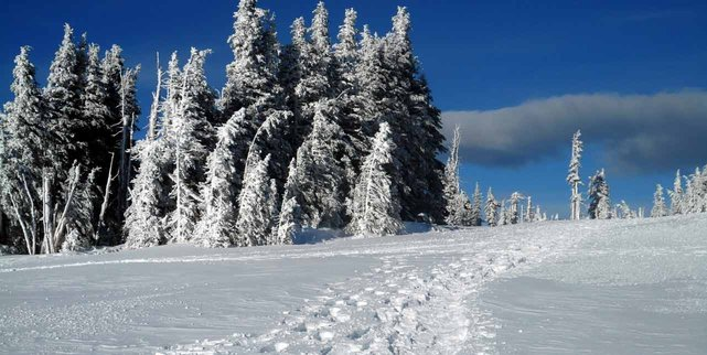 Photo of hiking trail near Port Angeles in winter