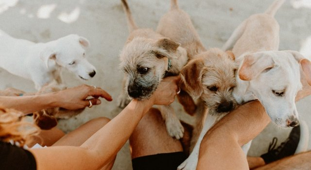 Photo of dogs on property at Baja Acre resort in Mexico.