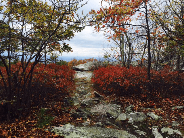 Photo of the Appalachian Trail in Loudoun