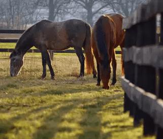 A Photo of Horses in Loudoun