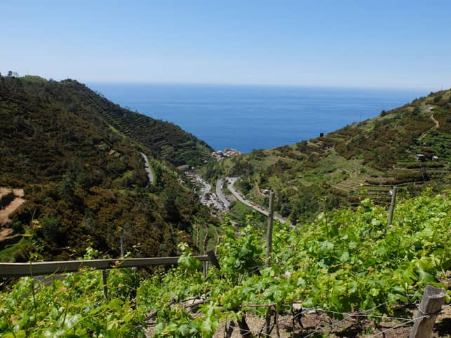 A Photo of a Vineyard in Manarola in Cinque Terre, Italy