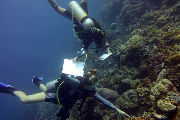 Coral Cay Conservation Volunteer Training